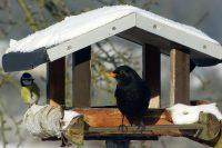 Vogelhaus Vögel füttern